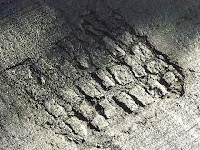 Radiografía del asfalto