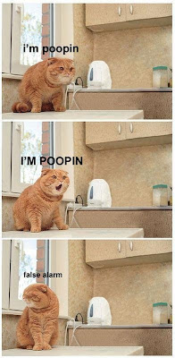 funny-cat-i'm-poopin