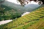 Vinho do Douro