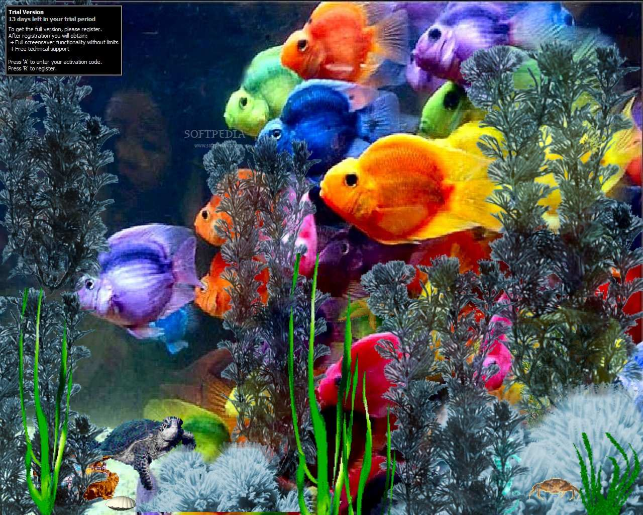 Random stuff - Fish tank screensaver pc free ...