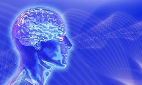 [cerebro-artificial.jpg]