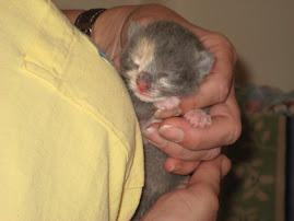 Tiny Baby #1