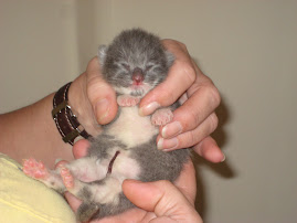 Tiny Baby #3