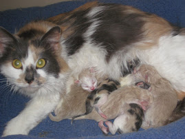 Macie and her New Babies!