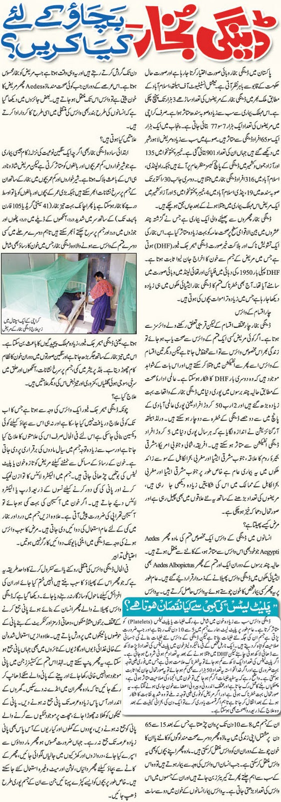 Dengue fever urdu tips, safety from dengue. Read in Urdu about dengue