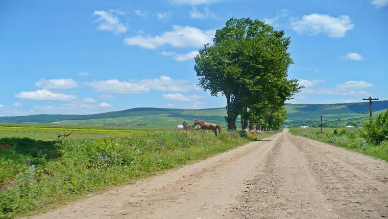 ROMANIA - TARAMUL VIETII