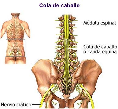 Las almohadas ortopédicas a sheynom la osteocondrosis comprar harkov