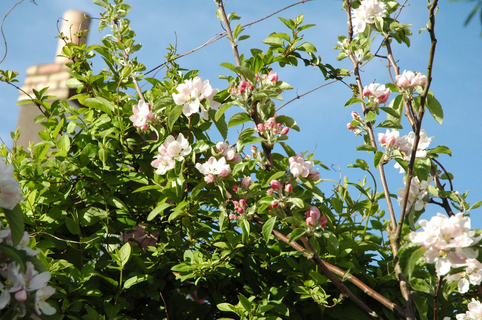 Displaying 19> Images For - Orange Blossom Tree...