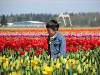 tulips+april+20+016.jpg