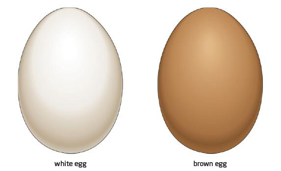The Green Light: East Egg Vs. West Egg.. Who will win?