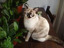 Jade Gatosa