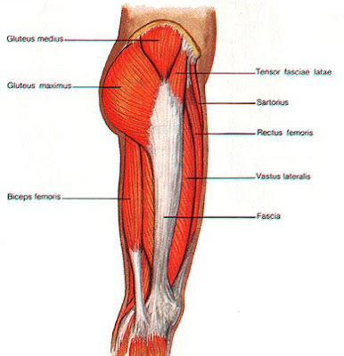 """the heart healthy lifestyle: the """"outer thigh"""" exercise, Human body"""