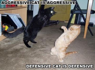 Funny Pictures, Funny Cat pictures, Wallpapers, Funny Pictures, Funny Cat pictures, Wallpapers, Funny Pictures, Funny Cat pictures, Wallpapers, Funny Pictures, Funny Cat pictures, Wallpapers