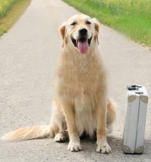 Viajar de Avião com Cachorro, Gato e outros Animais Domésticos