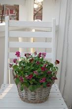 Lite vår på balkongen...