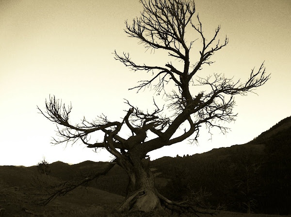 Awesome gnarly tree!
