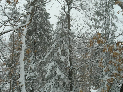 Same trees, new snow, new picture