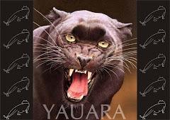www.yauara.com.br