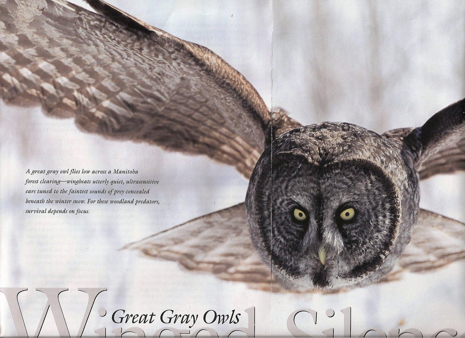 response to i heard the owl