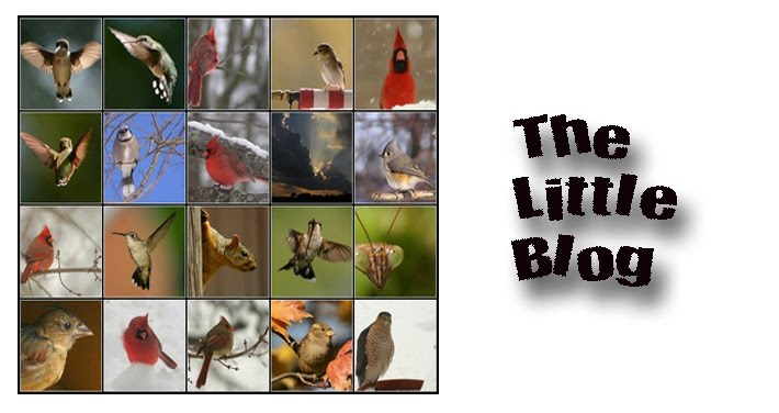 THE LITTLE BLOG
