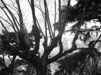 Árboles de Tandil