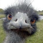Je ne suis pas une colombe mais qu'est-ce que je suis drôle!