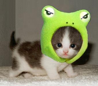 ���� 2012 cute_cats_5.jpg