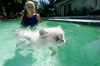 cats and water