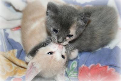 http://4.bp.blogspot.com/_gTJMEP-c2fo/SLffnUrVAbI/AAAAAAAAEB8/eJFfMbPzQDA/s400/kitten+love.jpg