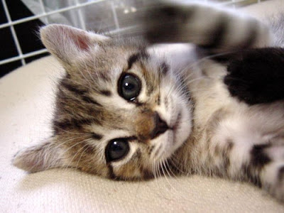 ��� ��� ���� ��� ���  2012 cute kitty 4.jpg