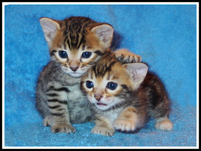 ��� ��� ���� ��� ���  2012 cute kitty 10.jpg