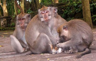 http://4.bp.blogspot.com/_gTJMEP-c2fo/STk-8jqKl3I/AAAAAAAAIcQ/93y-1BfKKJg/s400/cat+and+monkey+pic+3.jpg