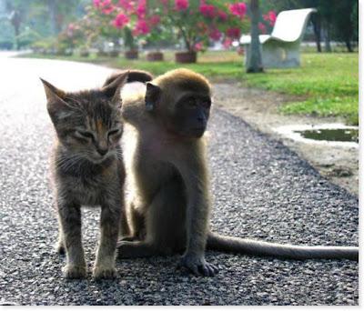 http://4.bp.blogspot.com/_gTJMEP-c2fo/STk_JHuo1MI/AAAAAAAAIdI/j39iH7qyf_A/s400/cat+and+monkey+pic+10.jpg