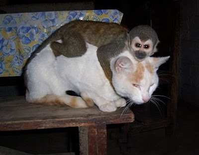http://4.bp.blogspot.com/_gTJMEP-c2fo/STk_kdhzC-I/AAAAAAAAIdo/qR0WMrn6szk/s400/cat+and+monkey+pic+11.jpg