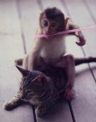 http://4.bp.blogspot.com/_gTJMEP-c2fo/STk_kpiqIYI/AAAAAAAAIdw/QY3BQxwFpEM/s400/cat+and+monkey+pic+12.jpg