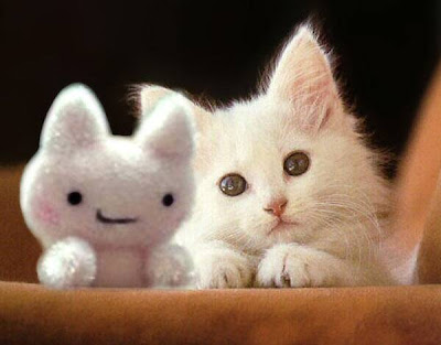 Cutepuppies  Kittens Wallpaper on Lovely Collection Of Cute Cats And Kittens Pictures