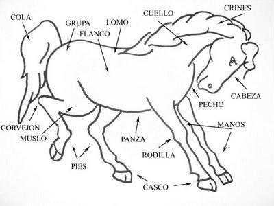 chicas desnudas sobre caballos