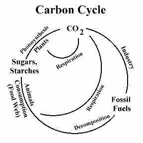 The carbon cycle diagram simple product wiring diagrams science carbon cycle rh 000technologyz blogspot com carbon cycle label worksheet carbon cycle flow chart ccuart Choice Image