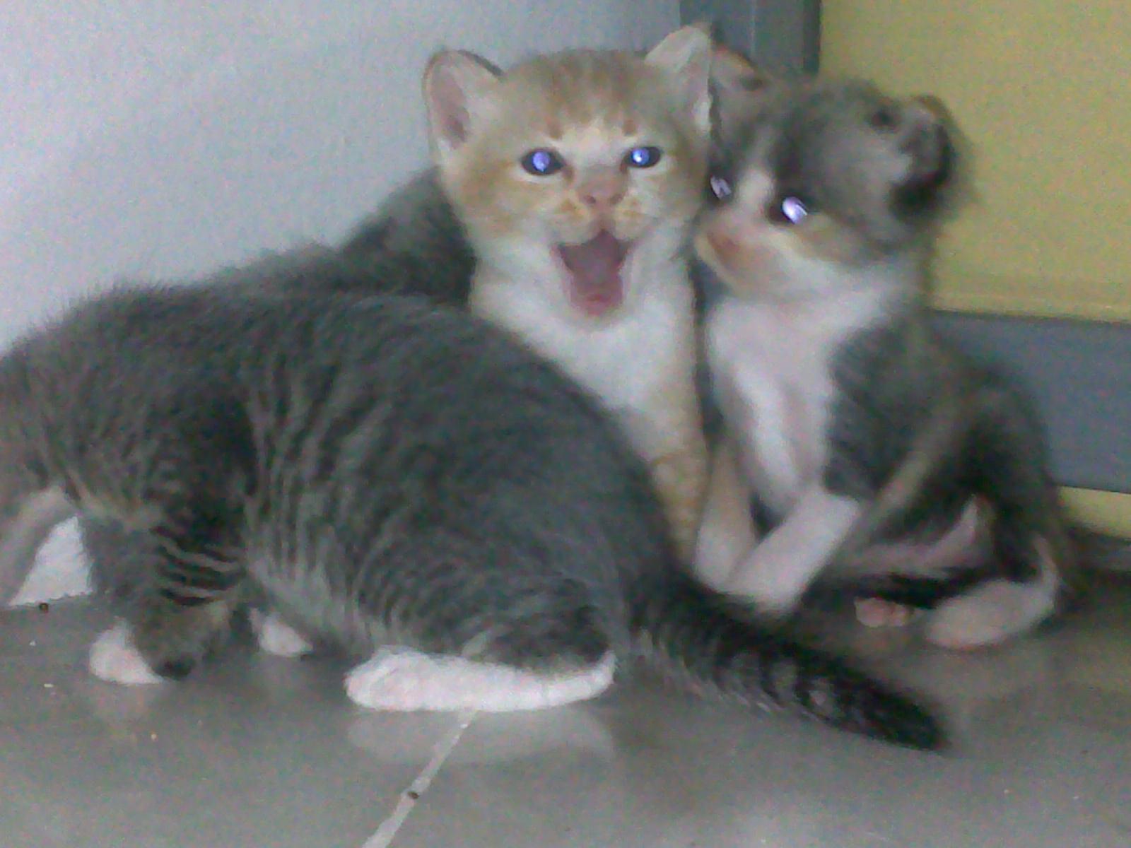 Hero Seekor Kucing Kurang Upaya Yang Penyayang