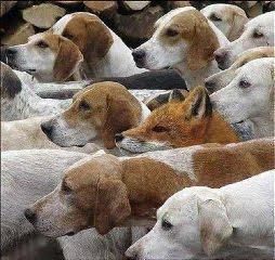 c'è un intruso!
