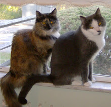 Our Furkids