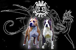 DARK DRAGON AMERIKAI STAFFORDSHIRE TERRIER KENNEL