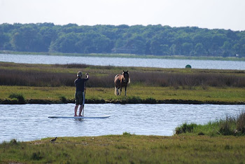 Explore Assateague Like Never Before