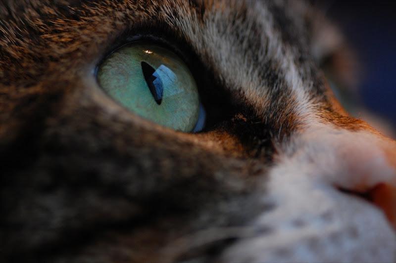 cat eye watching birds