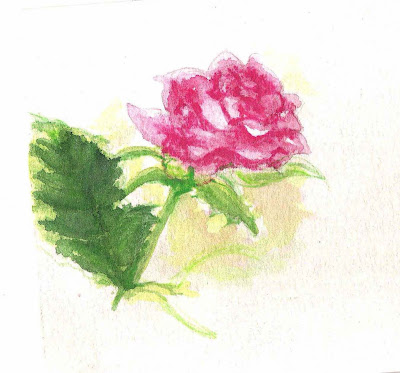 rose flower sketch. flower watercolor sketches
