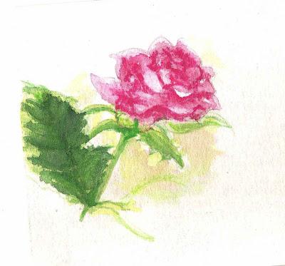 rose flower sketch. flower watercolor sketches