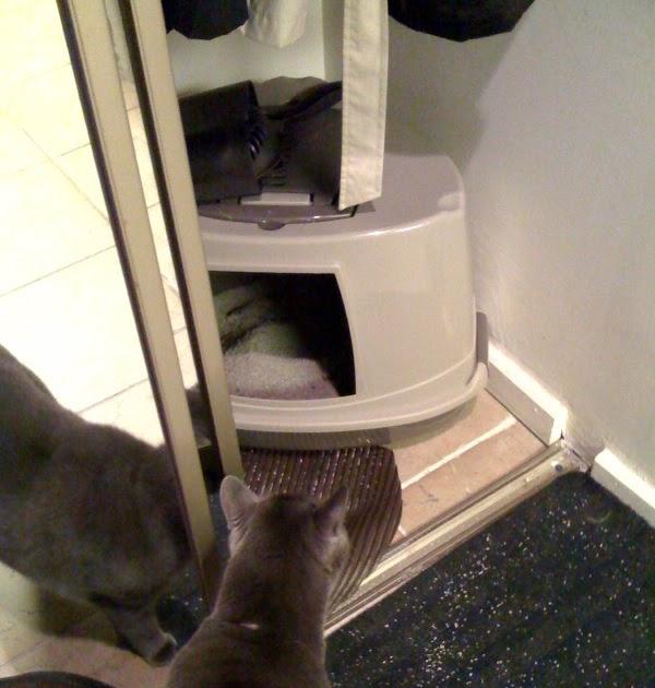 Paws Cat Litter Reviews