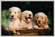 São os animais mais LINDOS do mundo!