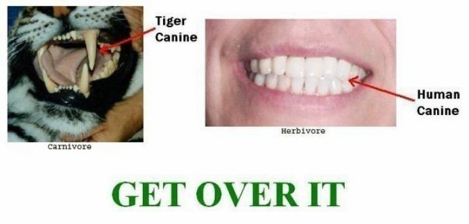 Vegetarian Dog Food Nature