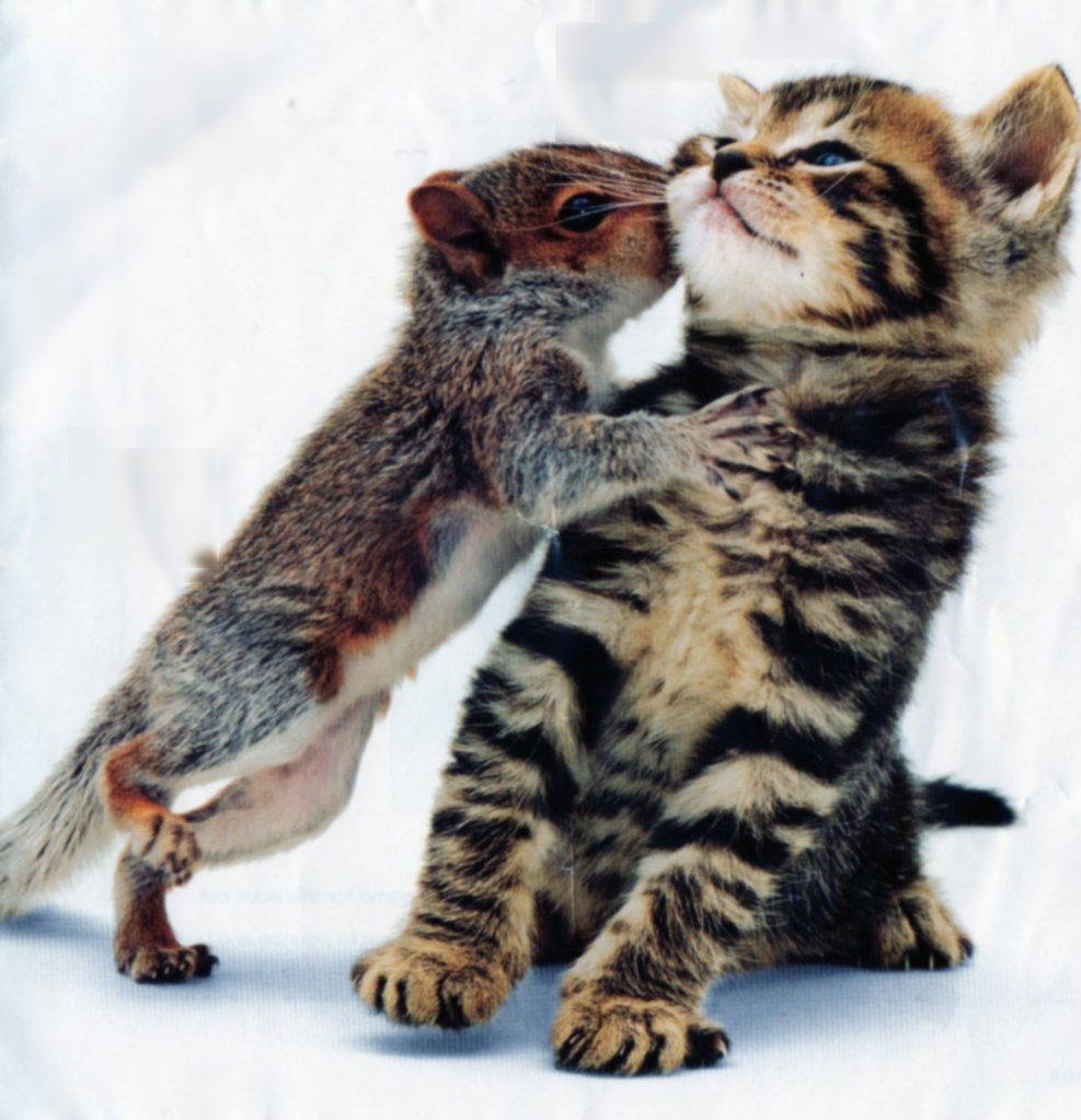 [kitten+and+squirrel.jpg]